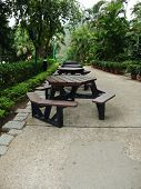 picture of tree trim  - Walk way with green trees - JPG