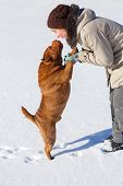 image of shar pei  - Woman playing with her shar pei on a winter sunny day - JPG