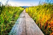 foto of greenery  - Wooden pier which extends across the marshes and greenery - JPG
