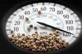 stock photo of seed bearing  - Car speedometer with hemp seeds on it in macro - JPG
