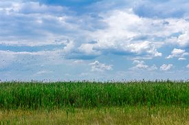 foto of marshlands  - Clouds above marshland with flock of water birds fly - JPG