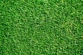 stock photo of lawn grass  - freshly lawn grass - JPG