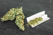 Cannabis Crushed Weed Joint Weed Macro Of Cannabis Buds Marijuana poster