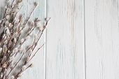 Background With Willow Branches And Buds. Spring Banner With Willow Branches. Congratulatory Backgro poster