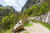 View from hiking trail (Cares Trail or Ruta del Cares), Picos de Europa National Park, province of L poster