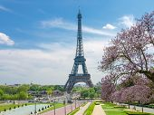 View Of The Eiffel Tower From The Trocadero Square With Pool And Blossoming Trees In The Foreground  poster