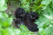 Abandoned Black Kittens, Kittens Are Waiting For Mom, Help Homeless Animals poster