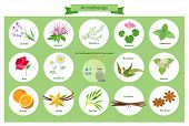 Aromatherapy - Illustration Orange - Fruit, Aromatherapy Oil, Vanilla, Cinnamon, Tea Tree Oil poster