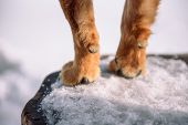 Canine Paw. The Legs Of The Dog. Home Pitolmets Stands On Its Feet. Take The Pets Paw. poster
