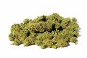 Dried Marijuana buds. Close up of Cannabis Sativa. Prescription Medical and Recreational Dried Marij poster
