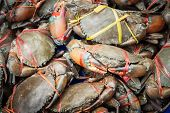 Fresh Serrated Mud Crabs Prepare To Sell On Street Food Market, Giant Mud Crabs, Serrated Mud Crab,  poster