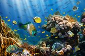 stock photo of aquatic animals  - Coral and fish in the Red Sea - JPG