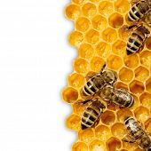 stock photo of beehive  - Close up view of the working bees on honeycells - JPG