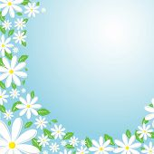 stock photo of daisy flower  - flower background - JPG