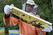 Male beekeeper holding honeycomb with honey bees