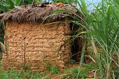 picture of mud-hut  - A small mud hut among tropical jungle grasses - JPG