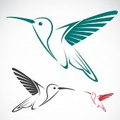 image of hummingbirds  - Vector image of an hummingbird on white background - JPG