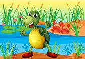 picture of sand lilies  - Illustration of a turtle in the pond with two crabs at the back  - JPG