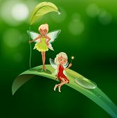 picture of slit  - lllustration of the two playful fairies - JPG
