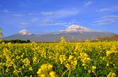 stock photo of apostolic  - Ararat is the highest point of the Armenian Highland - JPG