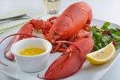 picture of butter-lettuce  - Boiled lobster on a plate with butter - JPG