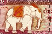 MYANMAR - CIRCA 2009: Elephant on 5000 Kyat 2009 Banknote from Myanmar.