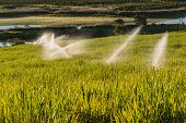 stock photo of sprinkler  - Sugarcane crops with irragation sprinklers over the scenic landscape - JPG