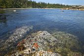 foto of pacific rim  - Landscape with starfish - JPG