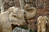 foto of indian elephant  - Old elephant in a park - JPG