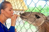 foto of lamas  - Young attractive woman feeding lama - JPG
