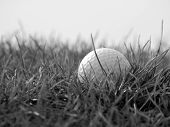 stock photo of dimples  - Closeup of golfball in rough grass on edge of golf course - JPG