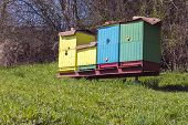 picture of beehive  - Colored beehives with bees on a spring meadow - JPG