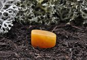 picture of calcite  - Colorful and crisp image of orange calcite on forest floor - JPG