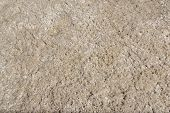 pic of hairy  - Hairy beige carpet texture  - JPG