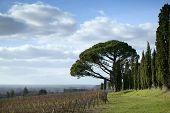 image of bordeaux  - Vineyards in the countryside near Bordeaux France - JPG