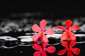 pic of stone-therapy  - Spa still life with two red orchid with therapy stones - JPG