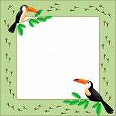 picture of toucan  - Frame with toucans sitting on a  branch - JPG