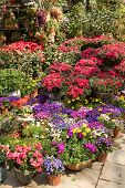 foto of plant pot  - Plants in pots on sale at the local garden center - JPG