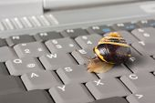 foto of lame  - Yellow and brown snail on a gray computer keyboard - JPG