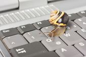 picture of lame  - Yellow and brown snail on a gray computer keyboard