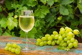 Wine Glass With Ice Cold White Wine, Outdoor Terrace, Wine Tasting In Sunny Day, Green Vineyard Gard poster
