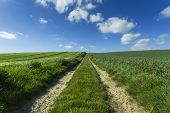 Agricultural Fields And Farm Road On A Sunny Spring Day In Normandy, France. Countryside Landscape. poster