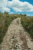 Rough Hiking Trail Going Through Rocky Terrain Covered By Bushes On Highlands, In A Sunny Day At The poster