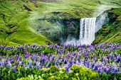 Skogafoss Waterfall In Iceland In Summer. poster