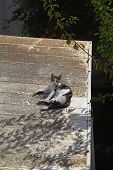 Cat Outside - House Cat Or Street Cat, Feral Cats Outdoors poster