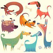 Cartoon Dogs Set. Vector Illustrations Of Dogs.  Retriever, Dachshund, Terrier,pitbull, Spaniel, Bul poster