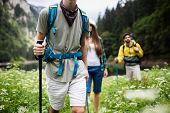 Trekking, Camping, Hiking And Wild Life Concept. Group Of Friends Are Hiking In Nature poster