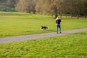 Woman Playing Fetch The Ball With Her Border Collie Dog In The Park. poster