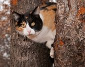 Beautiful calico cat peeking through two tree trunks
