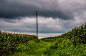 stock photo of utility pole  - Storm clouds over corn fields and utility poles in rural York County Pennsylvania.